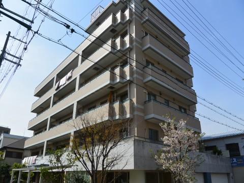 DSC_1158sinoharaminami_ks.jpg